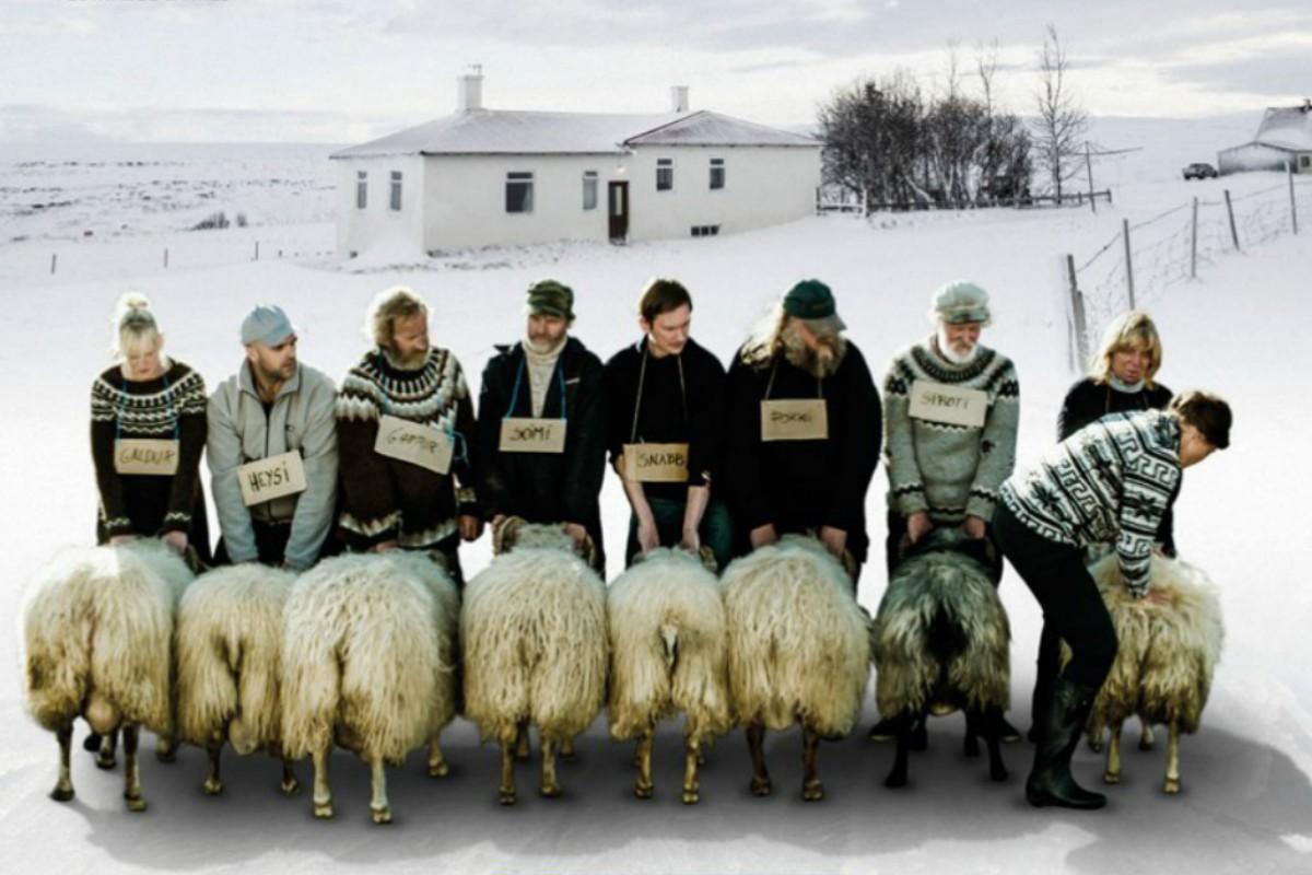 a-ovelha-negra