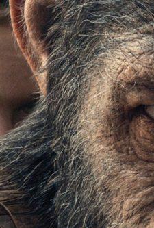 Planeta dos Macacos – A Guerra